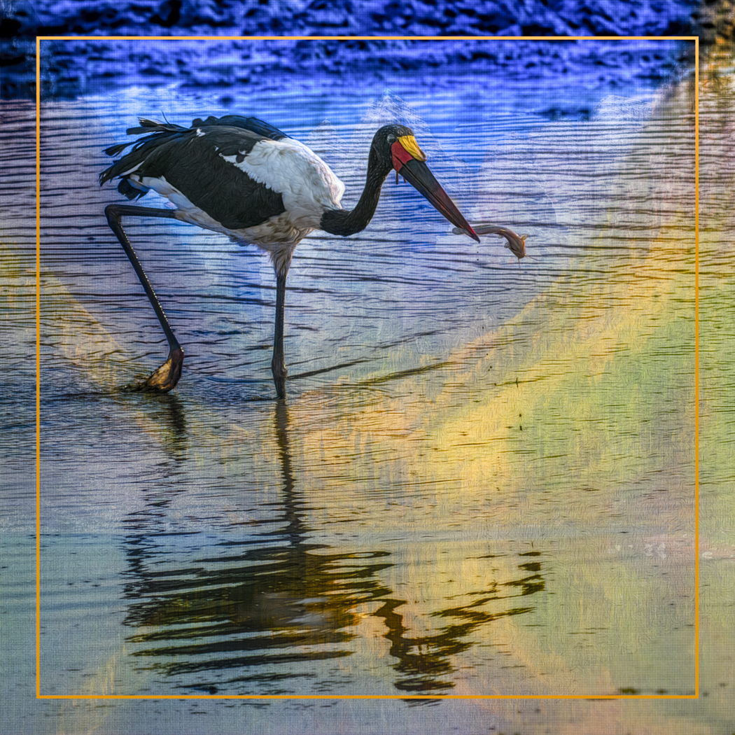 Fishing For A Complementary Color - Barbara Tricarico