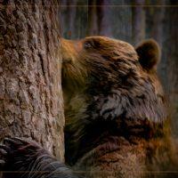 Tree Hugger - Judy Lanier