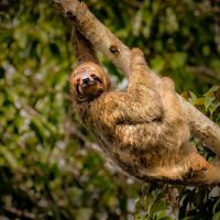 Just Hanging Around - Ellen Ahern