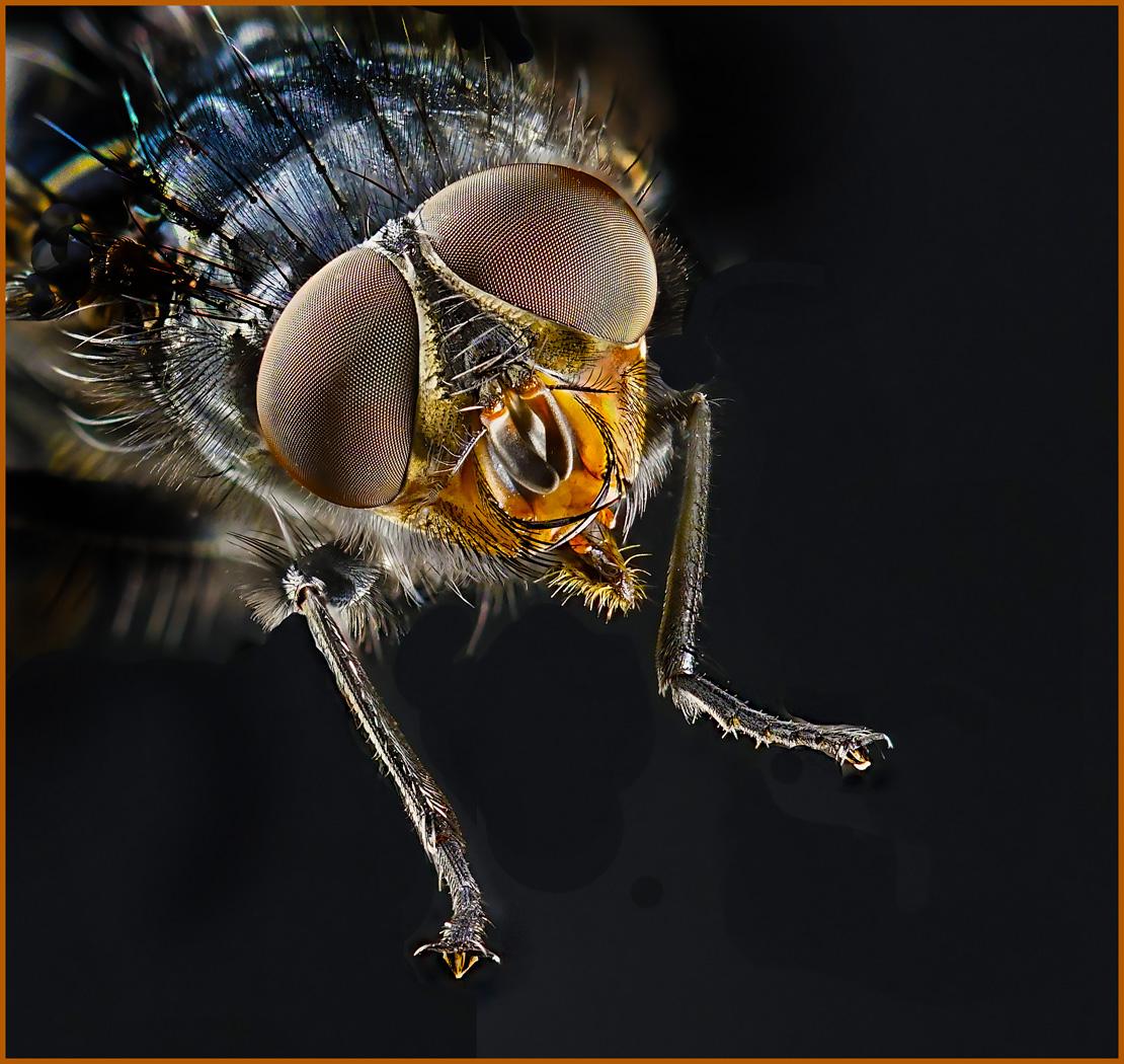 House Fly - Neal Thompson