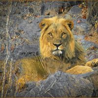Portrait Of A King - Barbara Tricarico