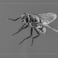 House Fly - Neal Thompson