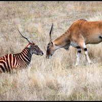 Eland Meets Zeland - Howard Hunt